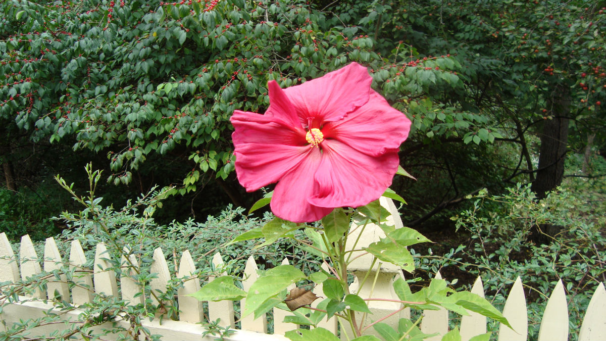 pink-flower-2.jpg