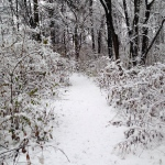 Snow covered path in the woods