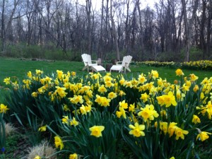 Adirondack Chairs and flowers